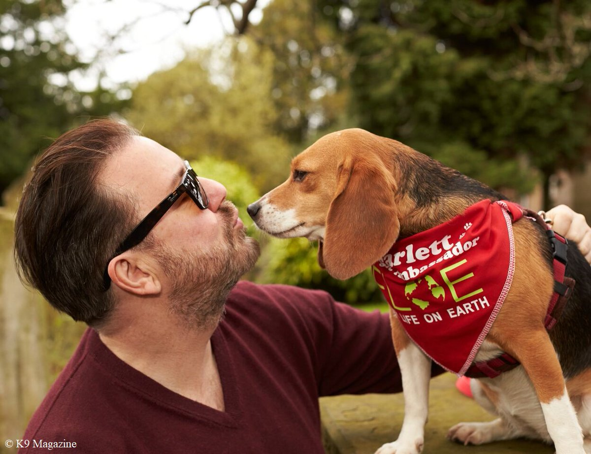 """@jim73194352 @rickygervais """"What a beautiful film Gunner woof! #ThankYouSirRicky, my amazing hero, for being such a thoughtful, dedicated & generous friend during #lockdown. You raise the spirits of so many, raise money for us dogs & keep us all happy with hilarious banter !! We love you so much."""" 🐾🙏❤️"""
