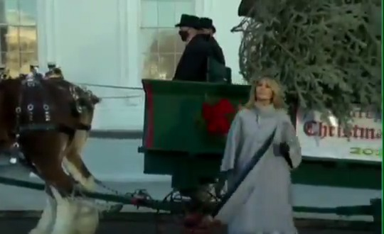 JUST IN: First Lady Melania Trump receives final Christmas Tree of the Trump Presidency.
