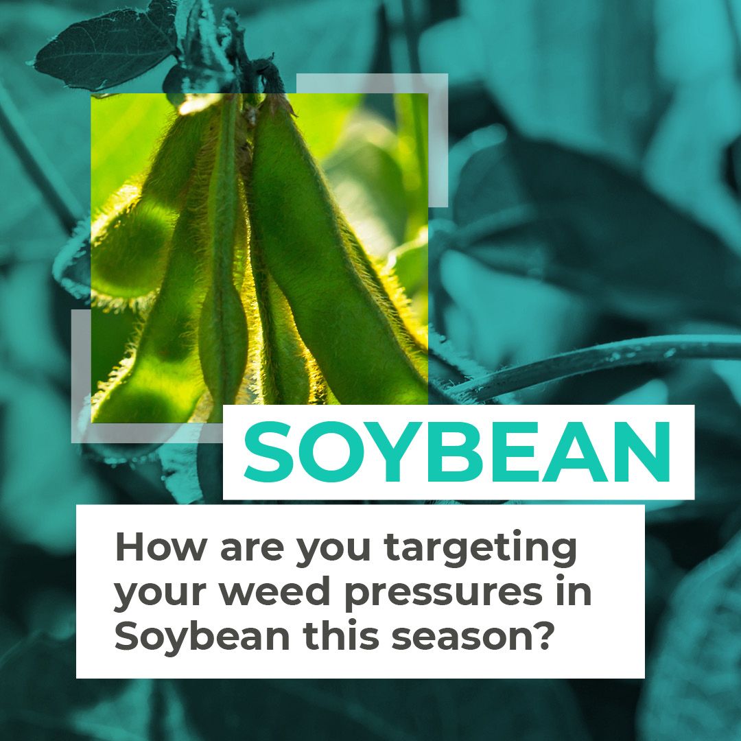 In Brazil, our Post-Emergence #WeedMaps identify areas within fields with weeds, at scale, to help targetyour herbicide applications 🚜  Look out for our #Soybean case study showing up to 50% herbicide reduction & positive ROI, coming soon!   Contact sales@hummingbirdtech.com https://t.co/llarml0WPI