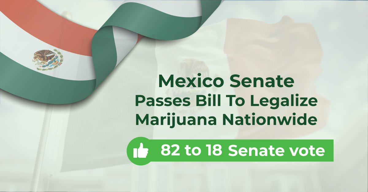 Mexico's Senate votes to pass legal cannabis bill! The senators voted 82-18 in a landslide victory for cannabis. #cannabis #mexico #cannabislegalization