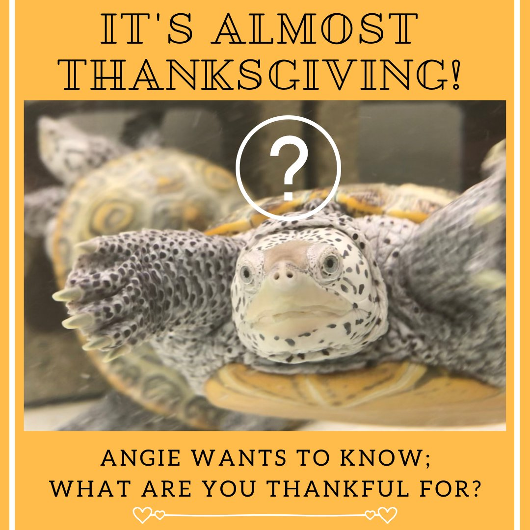 Angie is thankful for snacks and her heat lamp!  #Thanksgiving  #Educationanimals #Snacks #Thankful
