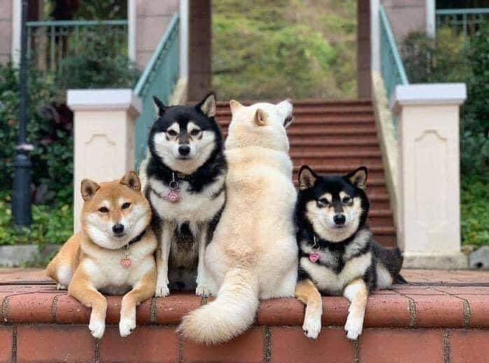 me failing to sync with the gang on every single group photo https://t.co/j5vNNto6Jc