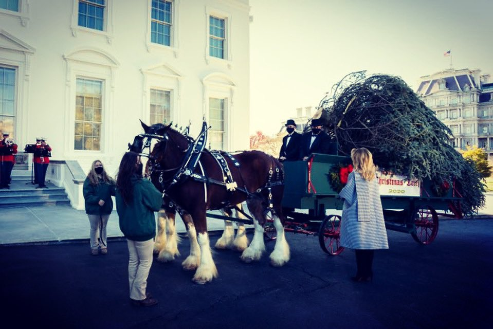 Today I welcomed the arrival of the beautiful @WhiteHouse Christmas Tree! We are excited to begin decorating the People's House for the holiday season! #WHChristmas