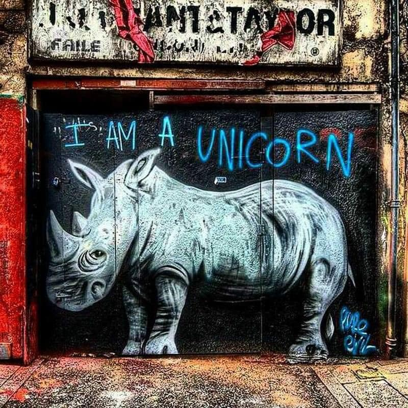 I AM A UNICORN ... He has all the reason! . . . I wouldnt make him angry 2 tell him tht he is not!  🦄✨ #unicorns come in different Szs + colors Or not? I 💖 rhinos! 🦏💫 #wearestillhere 😘🤟  #UNICORNIO #unicorns  #Rhino  #urbanart  #graffitiart  #WearMaskSaveLives #useMascara
