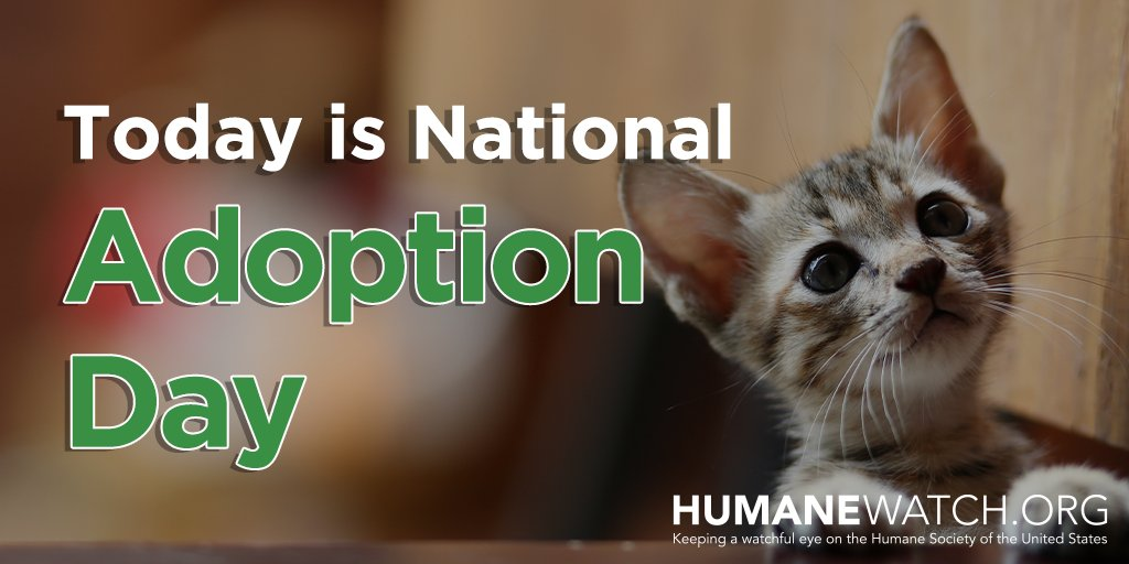 It's #NationalAdoptionDay. Visit your local shelter and consider giving an animal their forever home.