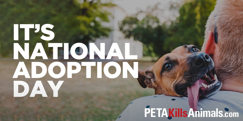 """It's #NationalAdoptionDay! Consider visiting your local animal shelter and adopting today. Many animals in PETA's """"shelter"""" are not afforded the opportunity."""