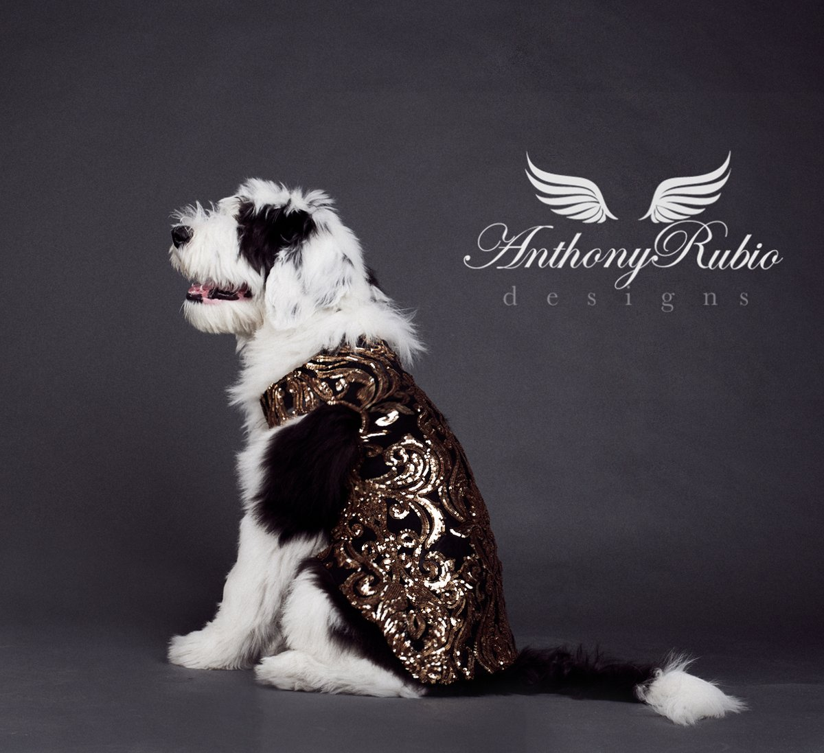 Milo the #Sheepadoodle, a puppy here shining bright. You are the light that's shining through.  Canine Couture by Anthony Rubio Designs.  #NYFW2020 #DogFashion #DogModel #FashionPhotography #WeeklyFluff #DogsOfNYC  #FashionEditorial #dogsinclothes #NYFW
