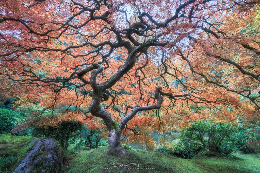 Japanese Maple Tree, Portland OR [2160x1440] (OC) IG - dan_peeters #nature #earth #photography #wanderlust Download our free photography eBook now: