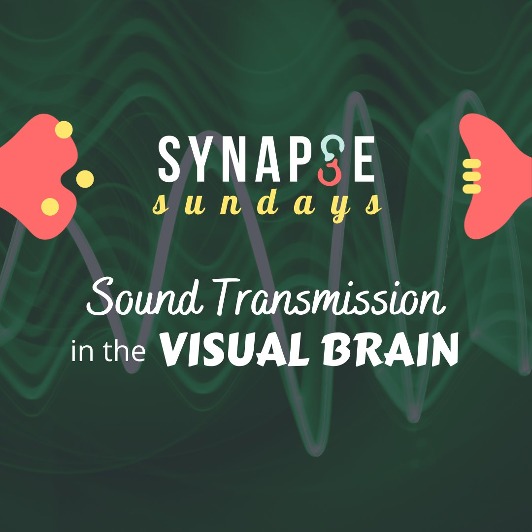 """Is the """"visual"""" cortex purely visual? Or can it process other types of information as well, such as sound? #UTSC #neuroscience #SYNAPSE #SYNAPSESundays #UofT"""