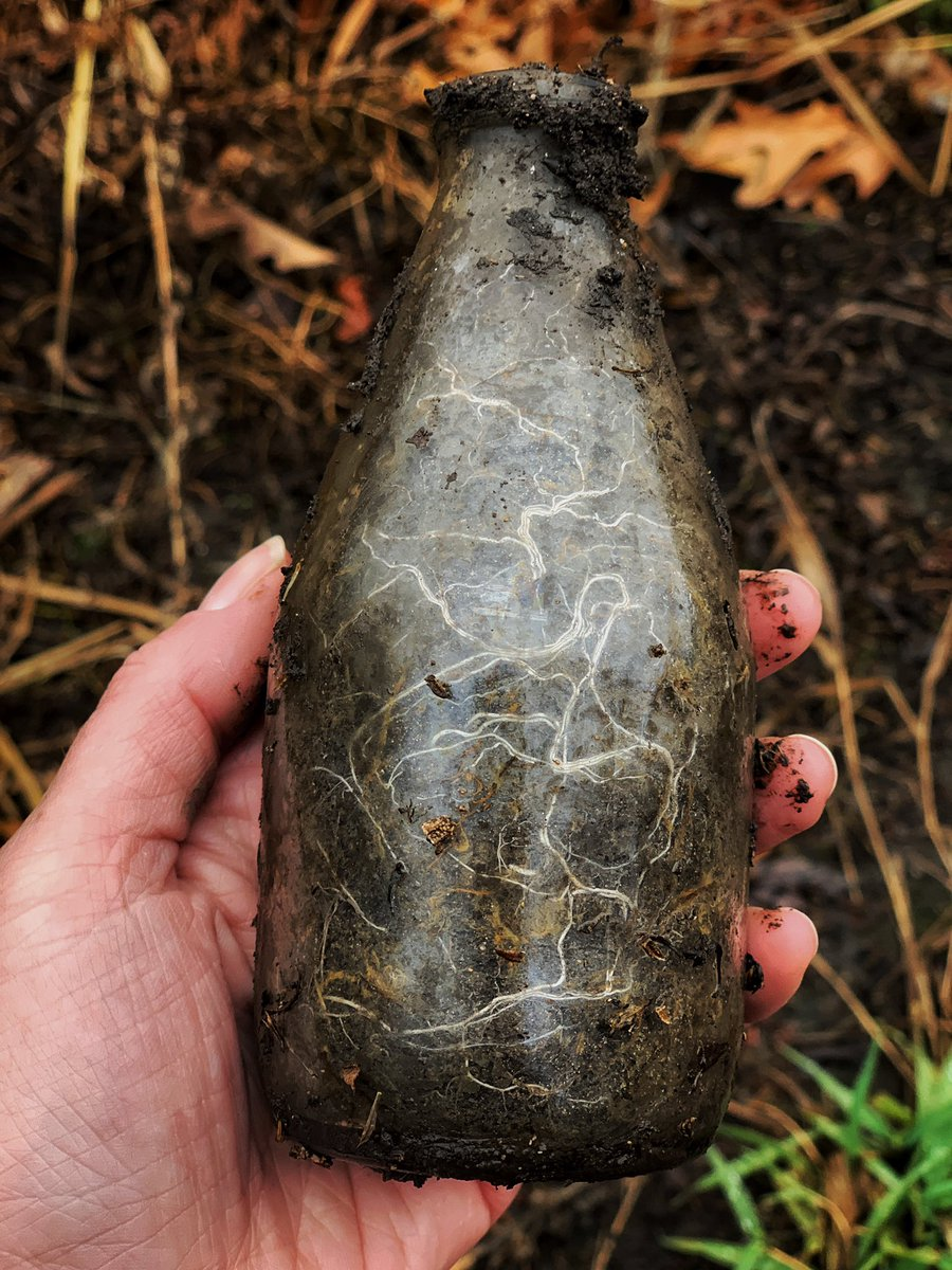 When a seed find itself in a bottle...submerged in mud, on the edge of a slough...