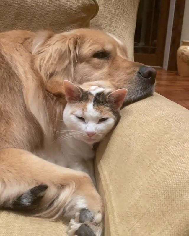 なかよしこよし飼い主が猫をなでようとすると…… 猫のことが好きでたまらないワンコのリアクションがかわいい @itm_nlabzoo