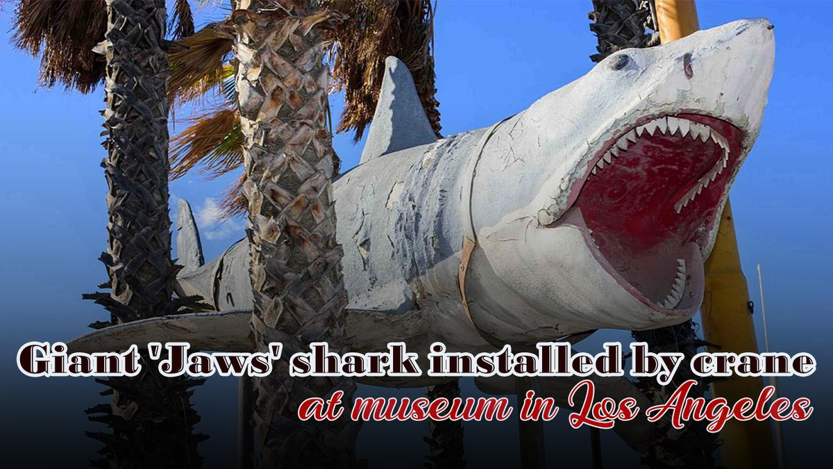 """Giant """"Jaws"""" shark installed by crane at museum in Los Angeles #BrucetheShark"""