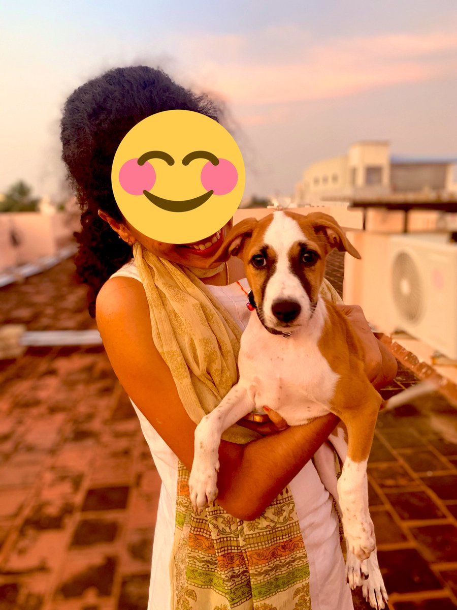 And here we are again! Our little Cookie is looking for a permanent home! She's 3 months old, will complete vaccinations tomorrow and is on her way to being house trained. Please help her find a home 💜#ChennaiAdoption #AdoptDontShop #Indie #PuppyAdoption