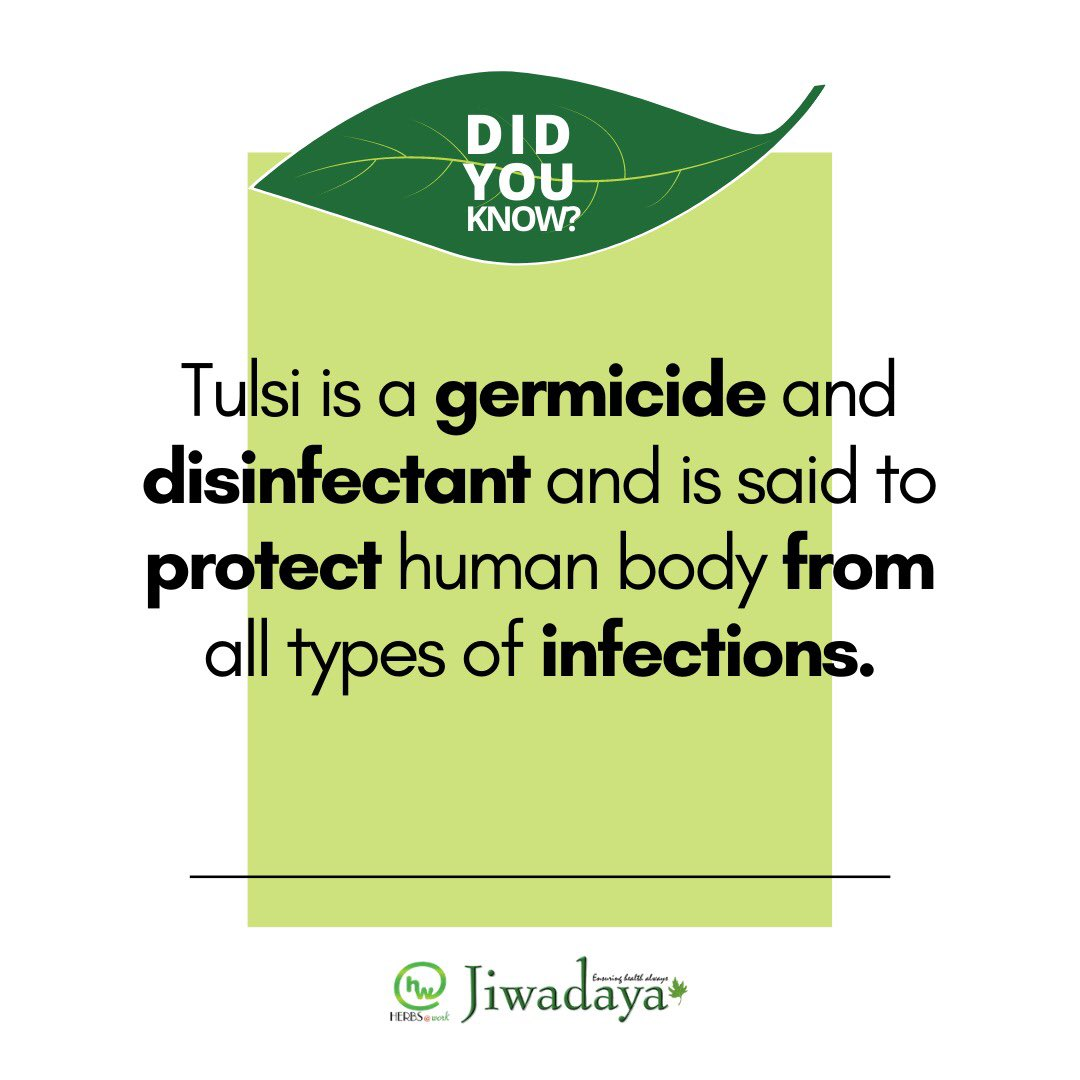 The Benefits of Natural Ingredients like Tulsi are renowned in Ayurveda. Cherish the Advantages especially in the upcoming Winter season when Cold & Cough infections rise.  #herbsatwork #jiwadaya #ayurveda #tulsi #herbal #homeremedies #cough #cold #infection