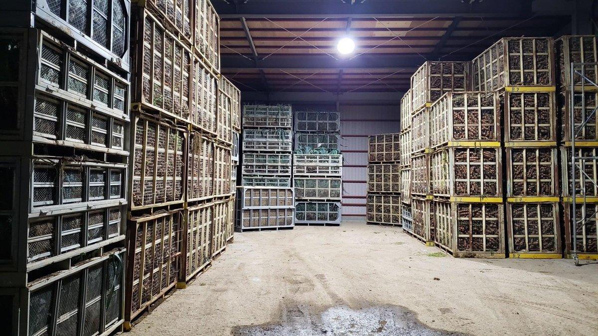 野菜の規格外品でも欲しいという方はいますか?北海道は規模が大きい分、廃棄の量も桁違い…😭この農家さんはこれから規格選別をすると約10トンのB品が廃棄になっていまうと聞きました。B品野菜セットにして「RT数×1キロ」分をネット販売で応援したいと思います!ご協力いただければ嬉しいです!!🙇♂️