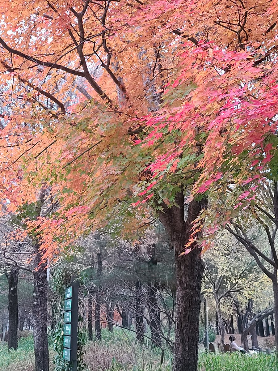 <Fall leaves @Seoulforest> #SEOULFOREST #fallleaves #fallfoliage #autumncolors #Seoul #beautifulkorea #beautifulseoul https://t.co/cGh77QESm3