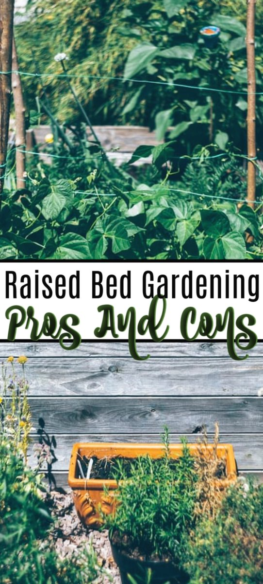 Pros And Cons Of Raised Bed Gardening  Raised bed gardens are all the rage. But are they really better? Click through NOW to check out the pros and cons of raised bed gardening...   #saving #family #savingmoneyisfun #savingplan #financialgoals