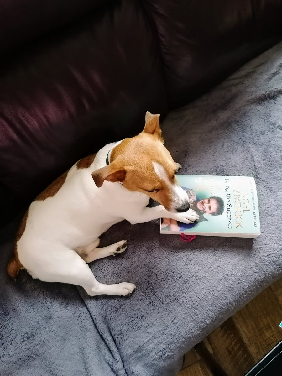 @ProfNoelFitz What a good read!Love hearing about the mischief Keira and Ricochet get up to! Keira I hope that you are continuing on the road to a full recovery. A big hello to your daddy Noel and all the Fitz family. Love from Charlie. 🤗😘