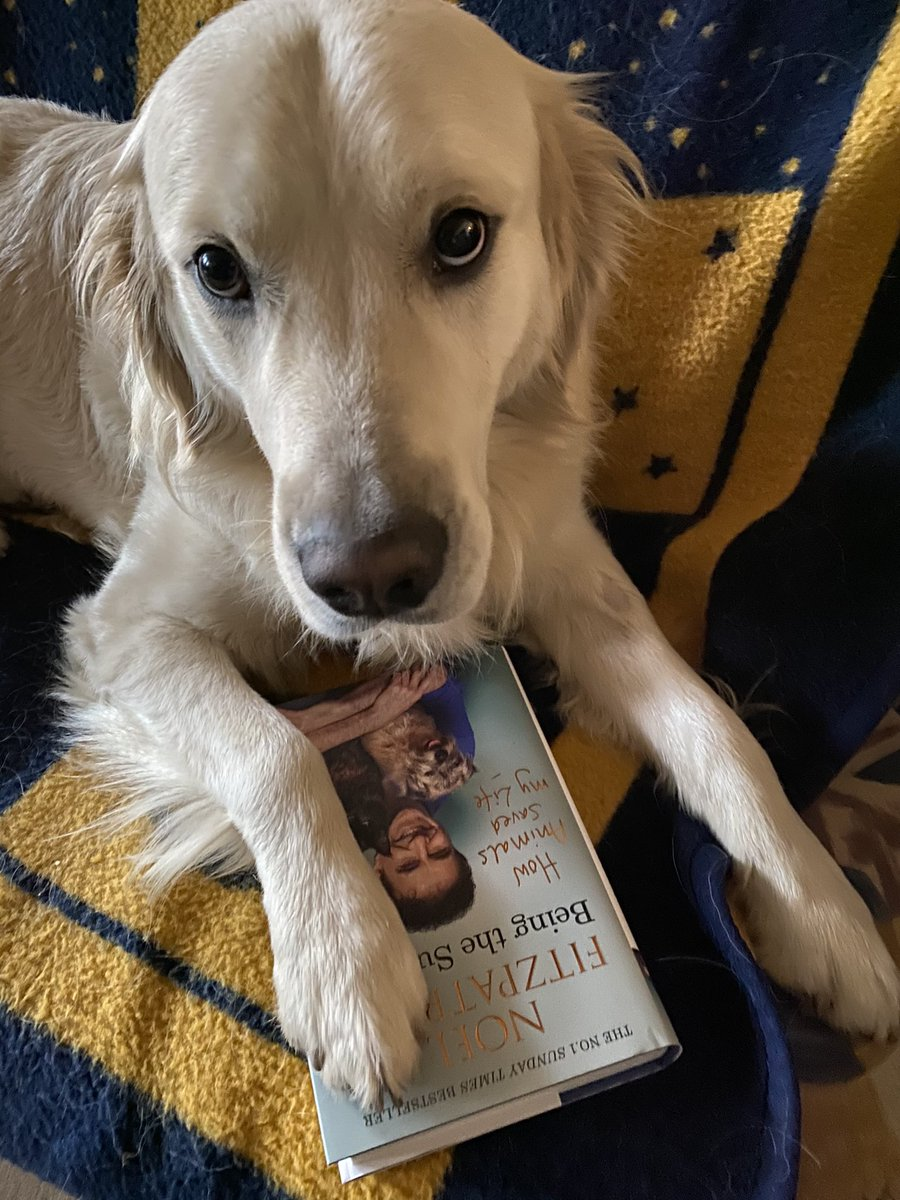 @ProfNoelFitz Hi uncle Noel! 👋🏻 Mummy bought me a new book. We read it every evening befor sleeping. Love it! 🧡🧡