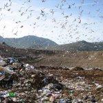 "Image for the Tweet beginning: Piano nazionale rifiuti, ""Governo Musumeci"