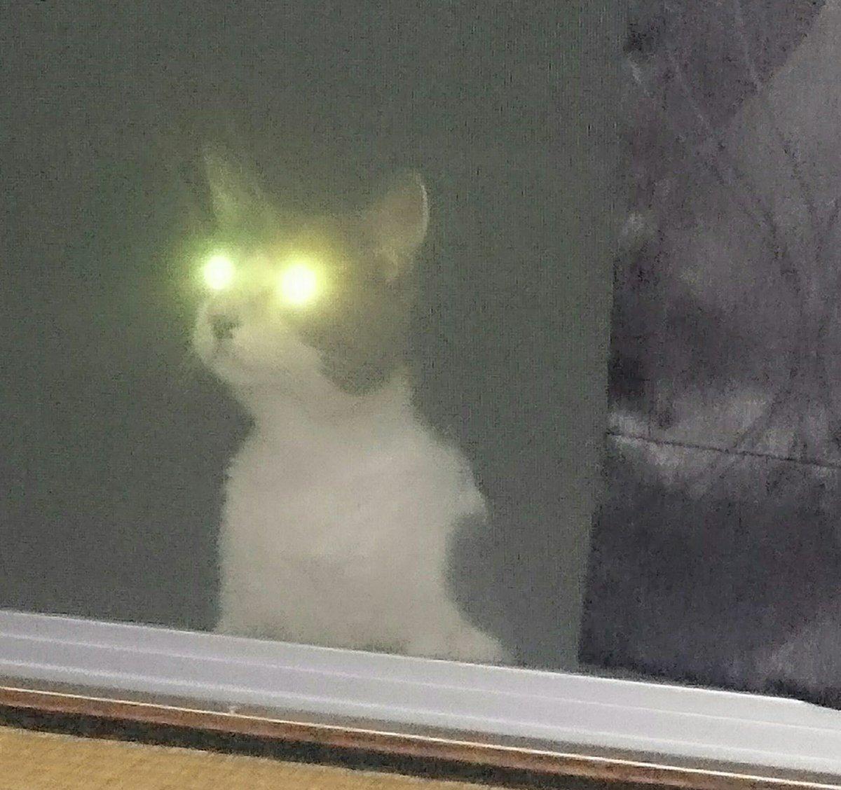 #全日本失敗写真協会満を持して、野良猫です