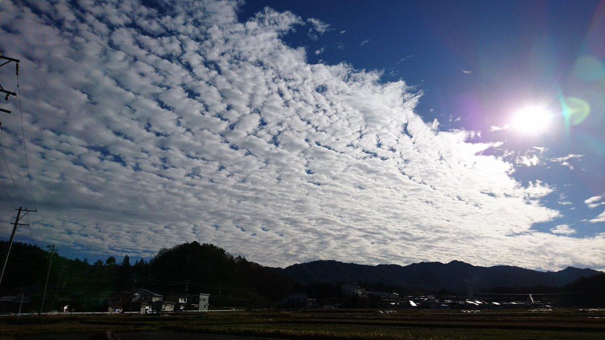 午後散歩へ👣 綺麗なうろこ雲だった 同じ空とは思えないほど右の空と左の空が違ってた https://t.co/ZvDI59xQH6