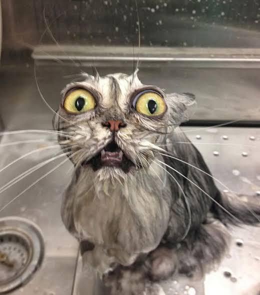 濡れると正体が…#全日本失敗写真協会