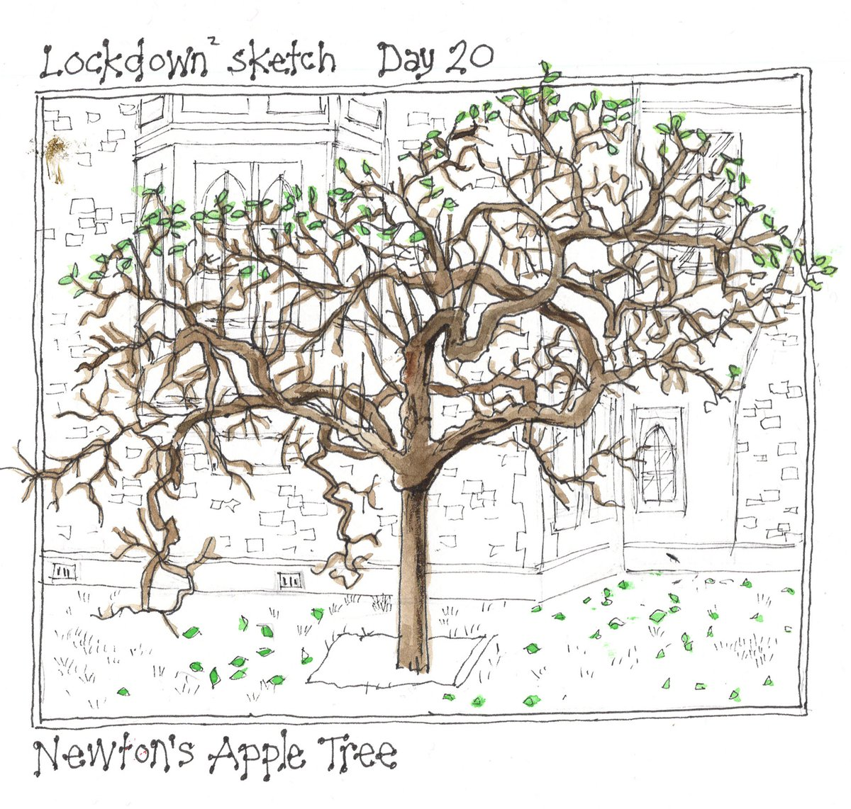 Lockdown2 sketch. Day 20. Newton's Apple Tree. Outside @TrinCollCam @USK_Cambridge  @Lockdown #Lockdown2 #sketch #Day20 #UrbanSketch #UrbanSketchers #AppleTree #NewtonsAppleTree https://t.co/YNCwhFecl8