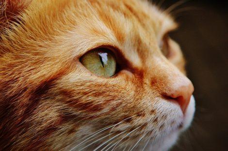 Prende a calci un gatto spezzandogli una zampa, condannato a pagare multa da 10 mila euro - https://t.co/imZNMpPmbl #blogsicilianotizie