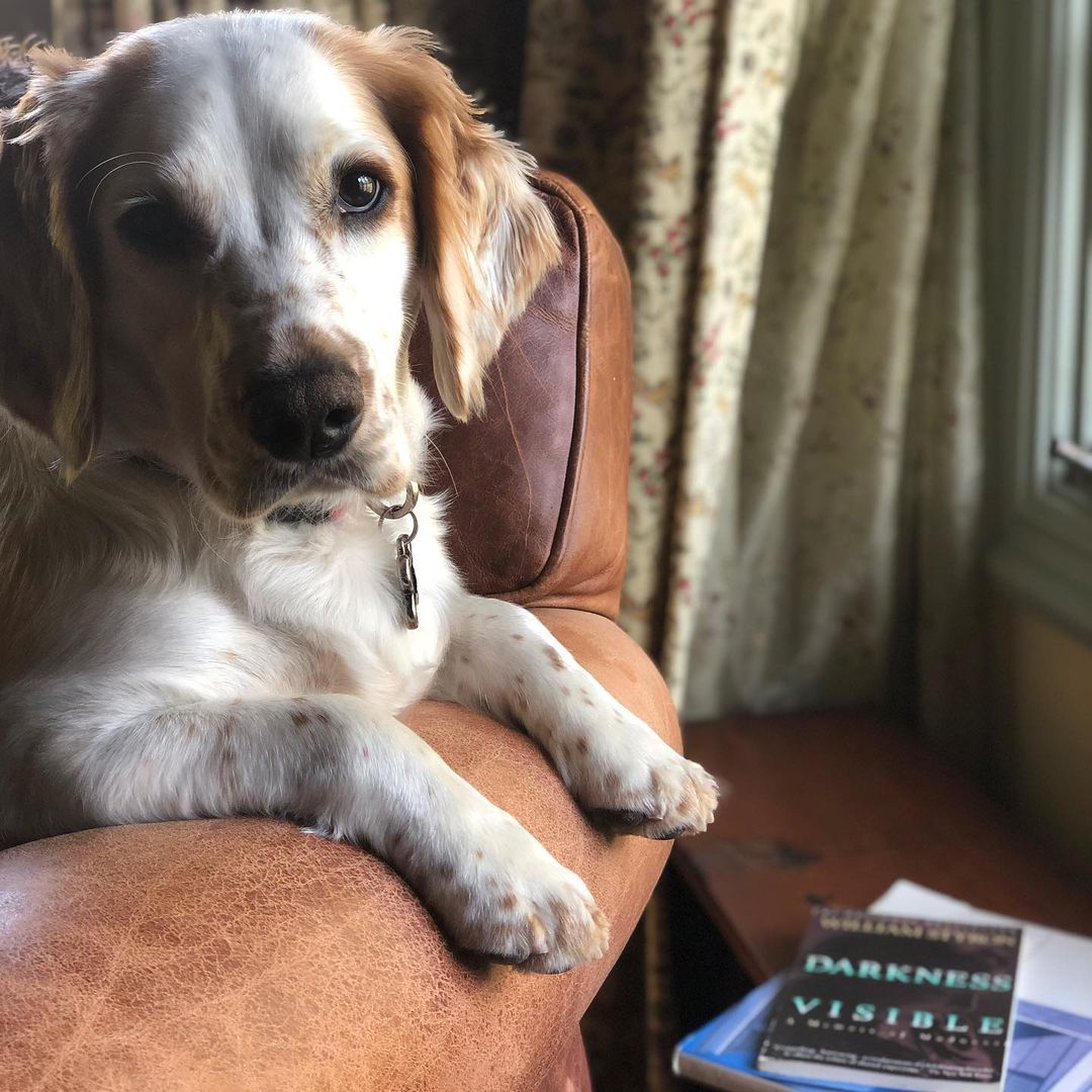 """My dog Russell has developed a very expensive habit of chewing holes in my decorative pillows. I gave him a time out to read Styron's """"Darkness Visible."""" I'll tell you how it goes."""