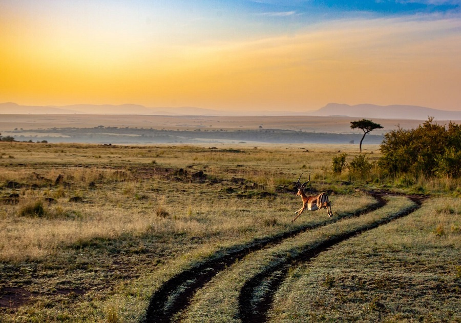 BOGO 50% off on this bucket-list Kenya safari and vacation. Air & 8 days in Africa! Wow! https://t.co/ZkuLgtC4e5  #travel #vacation #Africa #safari #culture #nature #animals #photo #photography #relax #adventure https://t.co/YEkF8HGgYk