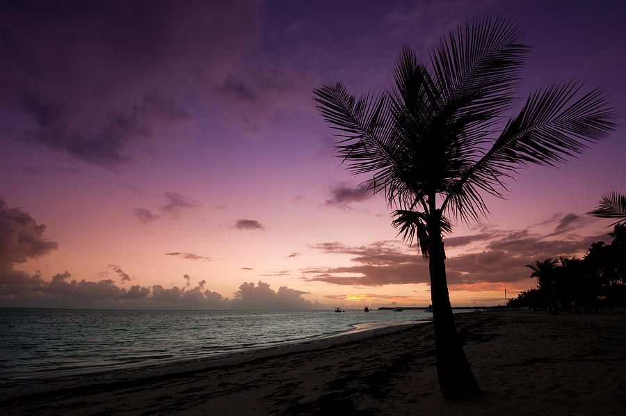 "#POTD for 11-24 ""Palm Tree Sunrise"" https://t.co/P3i792cPYD #photography #photo https://t.co/zO6Qeu9ROX"