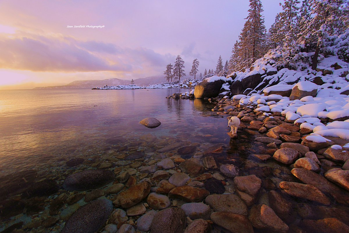 Tahoe Twilight  Enter The Lake Tahoe Gallery  Art for sale  A journey of vivid visions on the road less travelled    #Waterscapes #Dogs #Sierra #Nature #Travel #LandscapePhotography #Sunset #Guide #Portraits  #Autumn #Snow #PaintWithNature  #WaterProtector