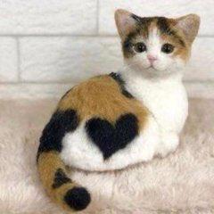 ハート猫!!!😂😂
