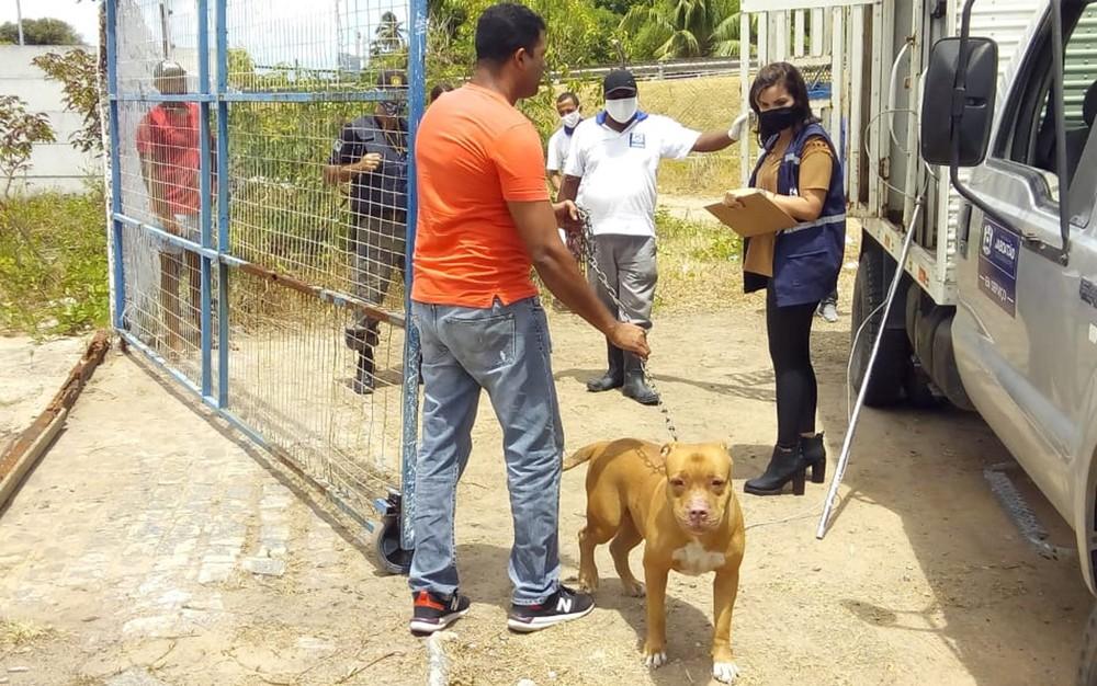 Pitbull que atacou criança no rosto em Pernambuco é recolhido para Centro de Vigilância Animal  #G1