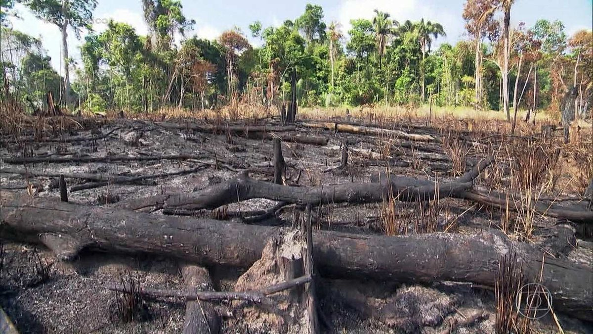 Judiciário tem mais de 283 mil ações sobre questões ambientais, aponta CNJ  #G1