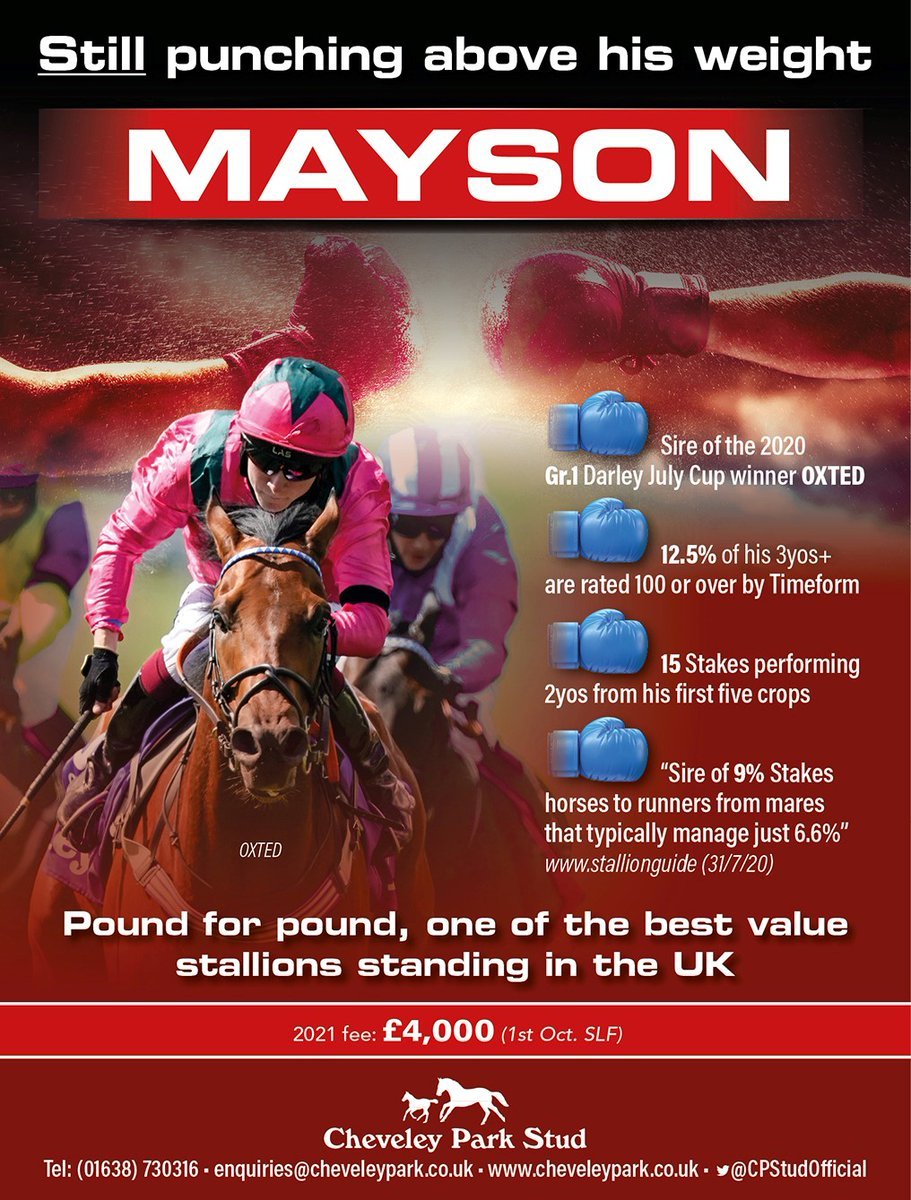 🥊MAYSON🥊  🪙Pound for pound, one of the best value stallions standing in the UK🪙