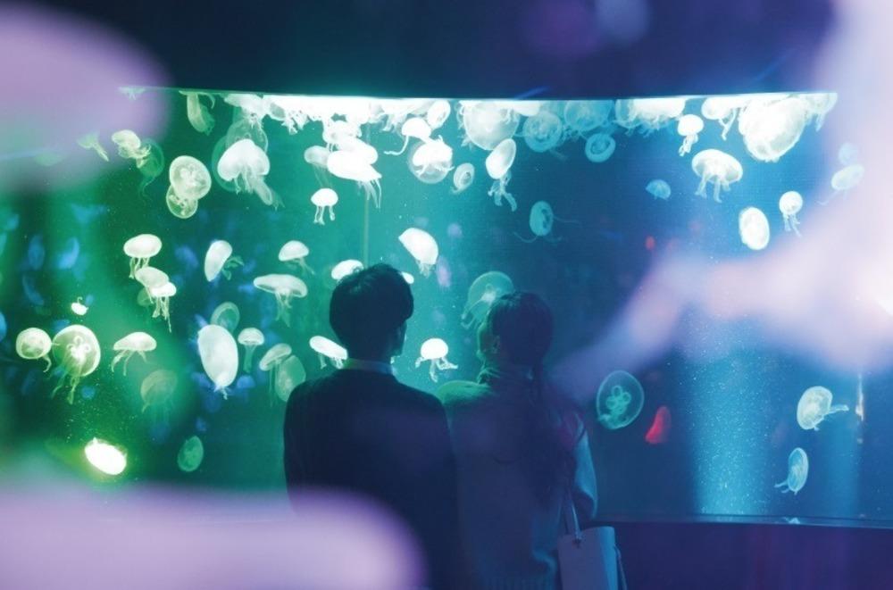京都水族館の冬イベント、クラゲ15種を象ったガラスランプの光の空間&幻想的なクラゲの映像演出も -