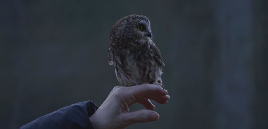 NEW VIDEO: Rockefeller Center Christmas tree owl 'Rocky,' released into wild from Upstate sanctuary https://t.co/NiHzJa7C8R https://t.co/Jl4RaGgWFP