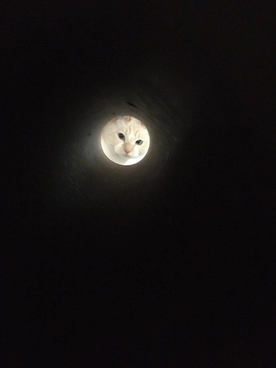 ラップの芯越しに猫撮ったら可愛いかと思ったんだけど 弟子が亡き師匠を偲んで見上げた夜空みたいな写真になったよね。#全日本失敗写真協会