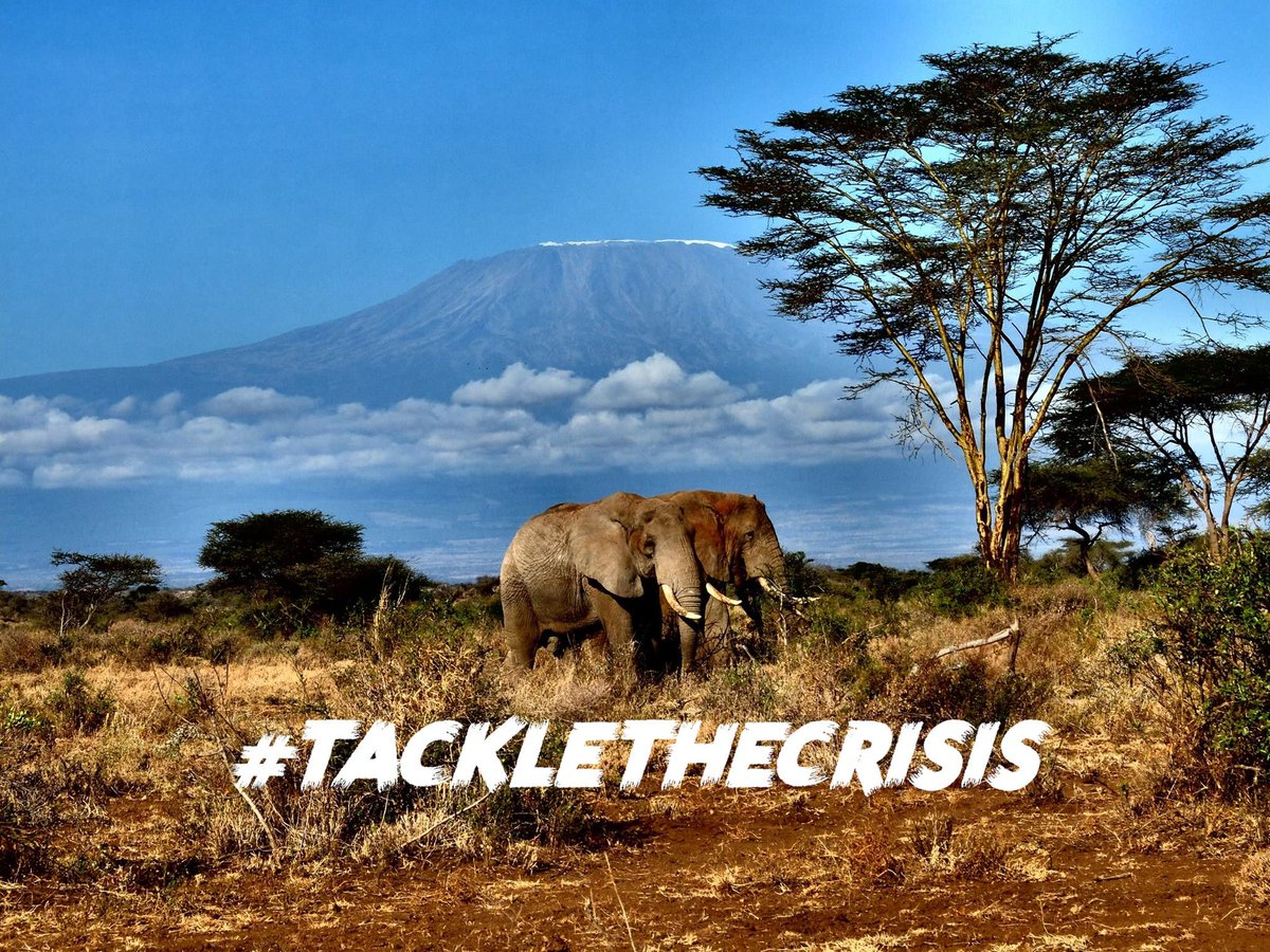 Replying to @ Earth_Changers_ #WednesdayWisdom: #TackleTheCrisis We're an #Ambassador for this new cross-sector #climatecrisis campaign to flood social media with #positive #environmental news, a welcome break from the deluge of doom!  Fol…