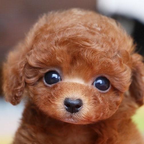 #dogsofinstagram #puppy #dogstagram #instadog #dogoftheday #doglover #animals #puppies #petstagram #ilovemydog #instagood #photooftheday #instapuppy #puppylove #instagramdogs #adorable #petsagram #dogsofinsta #puppiesofinstagram #pup #lovedogs #weeklyfluff