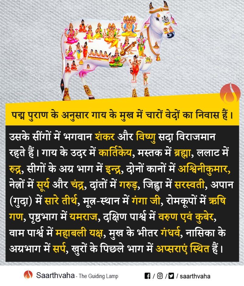 पद्म पुराण के अनुसार गाय के मुख में चारों वेदों का निवास हैं।  #Cow #Gaai #Gaumata #Vedas  #Hindu #shiva #Vishu #Hinduism https://t.co/3w7zHw4bAM