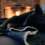 Winter is upon us, and the cost of heating can often be a struggle. But there are lots of ways to keep yourself and your family warm, without spending a lot of money. Follow our tips for staying toasty: https://t.co/VWtbbkajiK @ShropsCouncil #shropshire