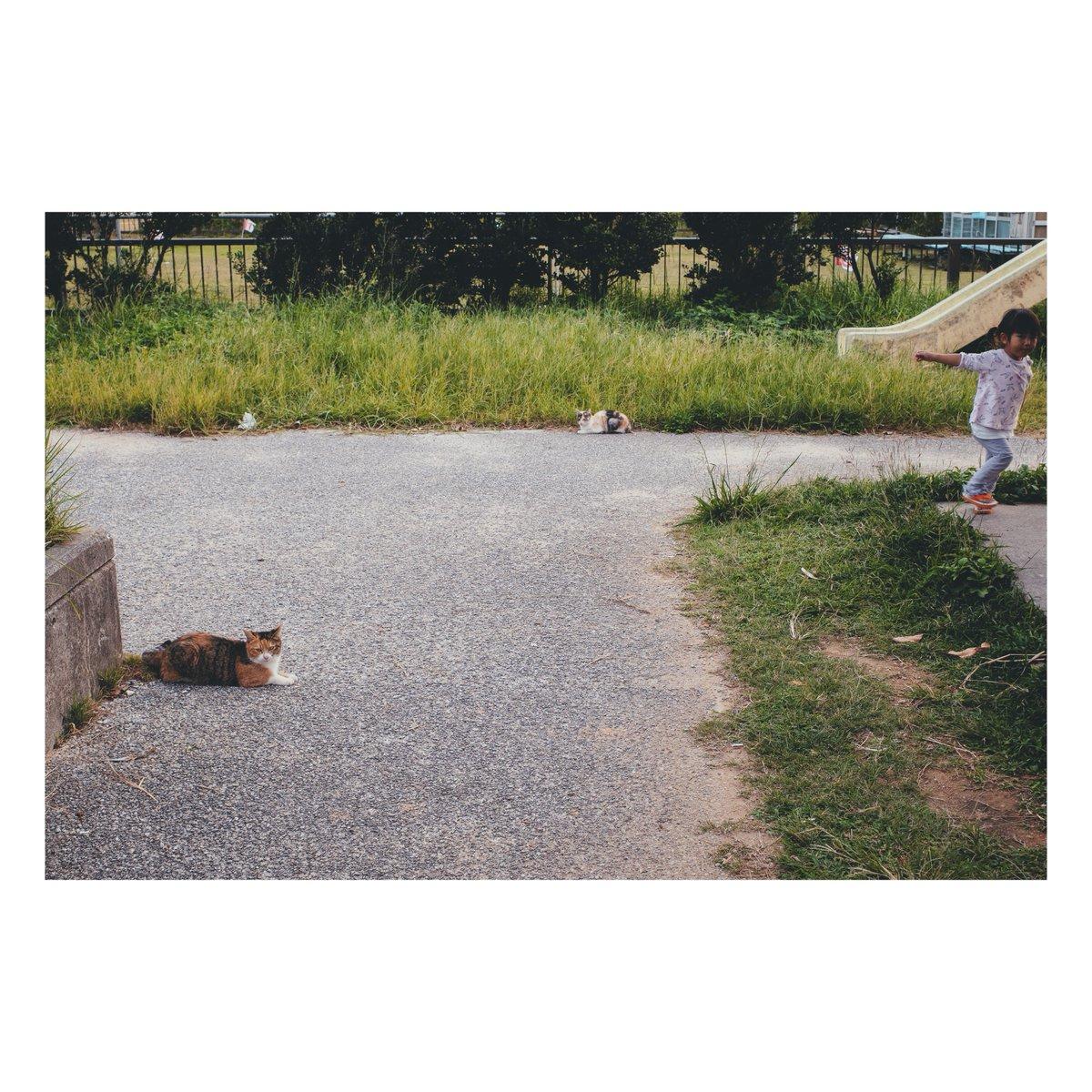 シュール。 #写真 #ファインダー越しの私の世界  #写真シェア #写真好きと繋がりたい  #GR3 #GRIII #沖縄 #お写ん歩 #vsco #ライフログ #にゃんこ https://t.co/GVXZWhPHOI