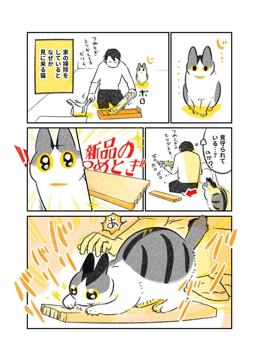掃除をしていると見に来る猫