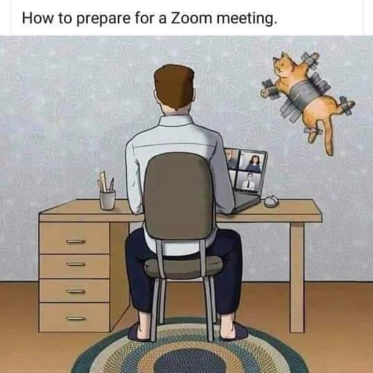 #zoommeeting #Catslife #catmemes #GraphicDesigner #ColorsCreator #Photography #Artist #Blogger https://t.co/gHxNhVv4i7