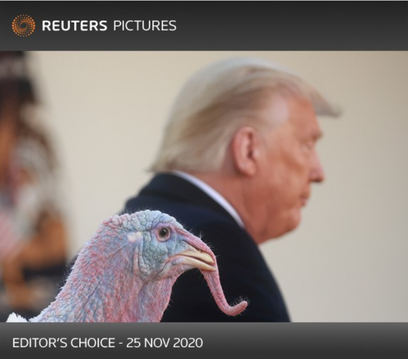 National Thanksgiving turkey stands by as U.S. President Donald Trump issues pardon @Reuters @hannahmckay88 For more outstanding pics: