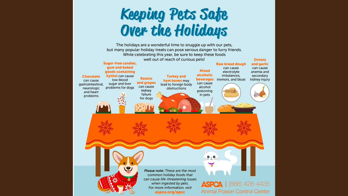 Help keep your pets happy and healthy this holiday! #Keepyourpetssafe #Thanksgiving #CityofBryan #Bryananimalcenter #Givethanks #Giving #Happyandhealthy #Turkeyday #Dogs #cats
