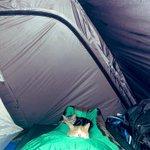 夜中にキャンプ場のテントの中で起きてしまい…。カメラで撮ったらこれが写ってた!